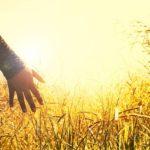 Niewłaściwie stosowane środki ochrony roślin mogą mieć negatywne skutki zdrowotne