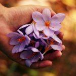 Poczta kwiatowa dla ważnej osoby – zamów teraz!