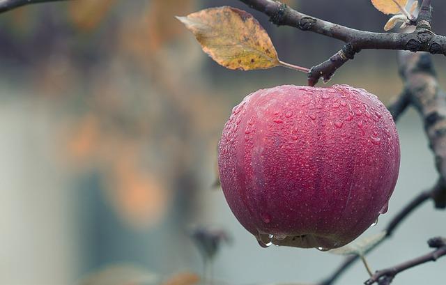 Właściwie przechowywanie jabłek