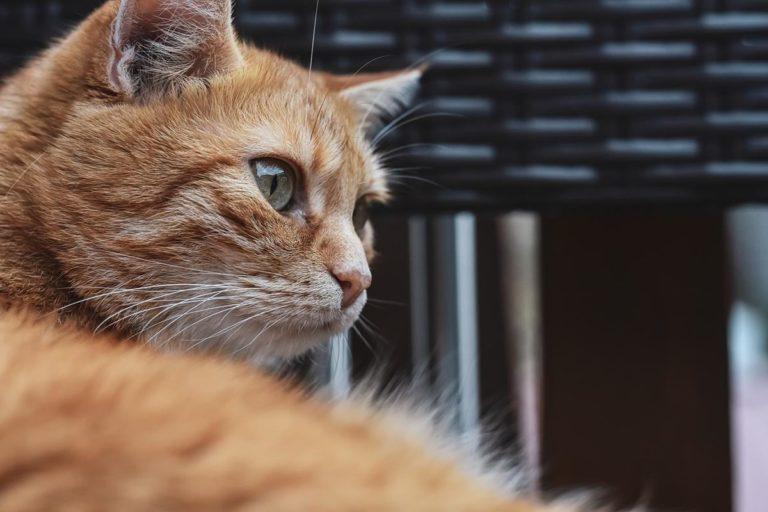 Najważniejsze wskazówki od guru pielęgnacji kotów